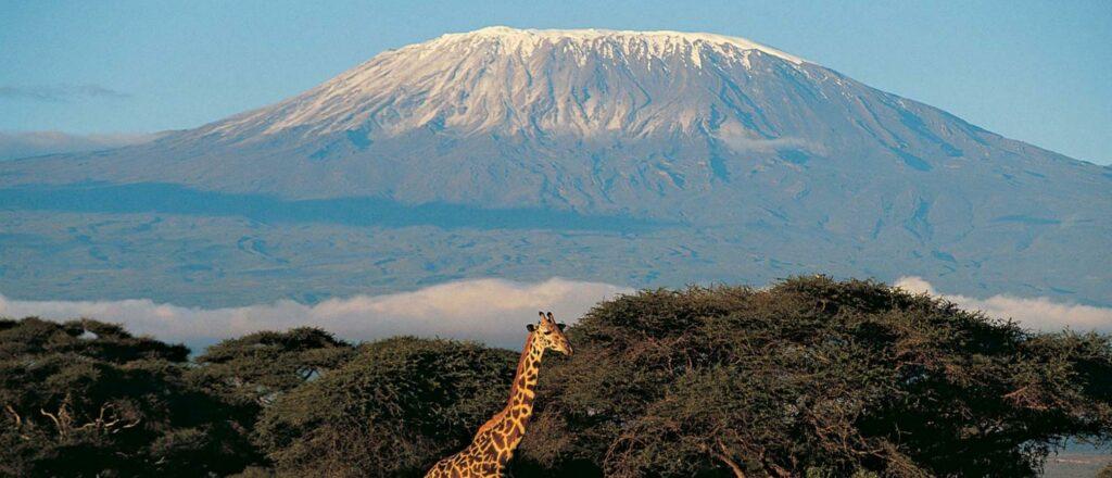Mount Kilimanjaro and a pretty giraffe